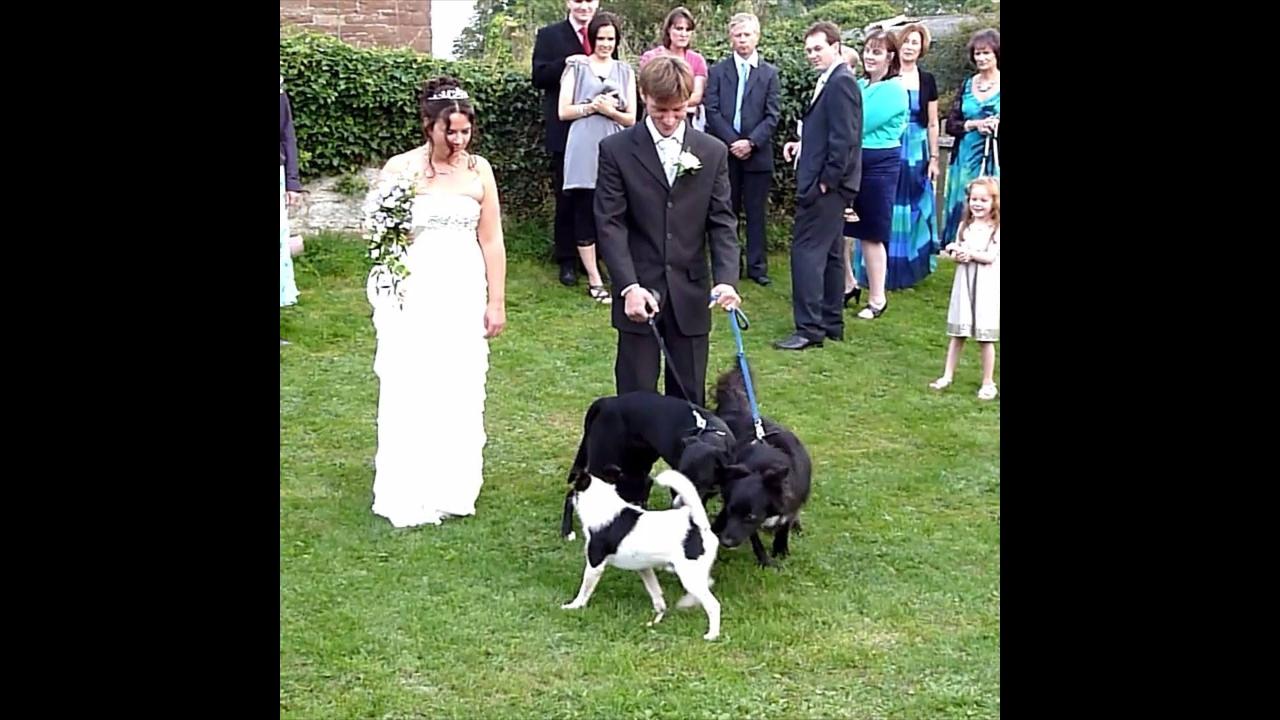 Vídeo de animais e casamentos