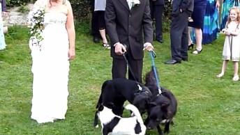 Vídeo De Animais E Casamentos, Uma Mistura Que Nem Sempre Da Certo, Hahaha!