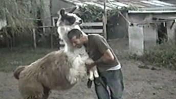 Video De Animais Para Fazer A Gente Rir, Para Quem Ama Os Bichinhos!