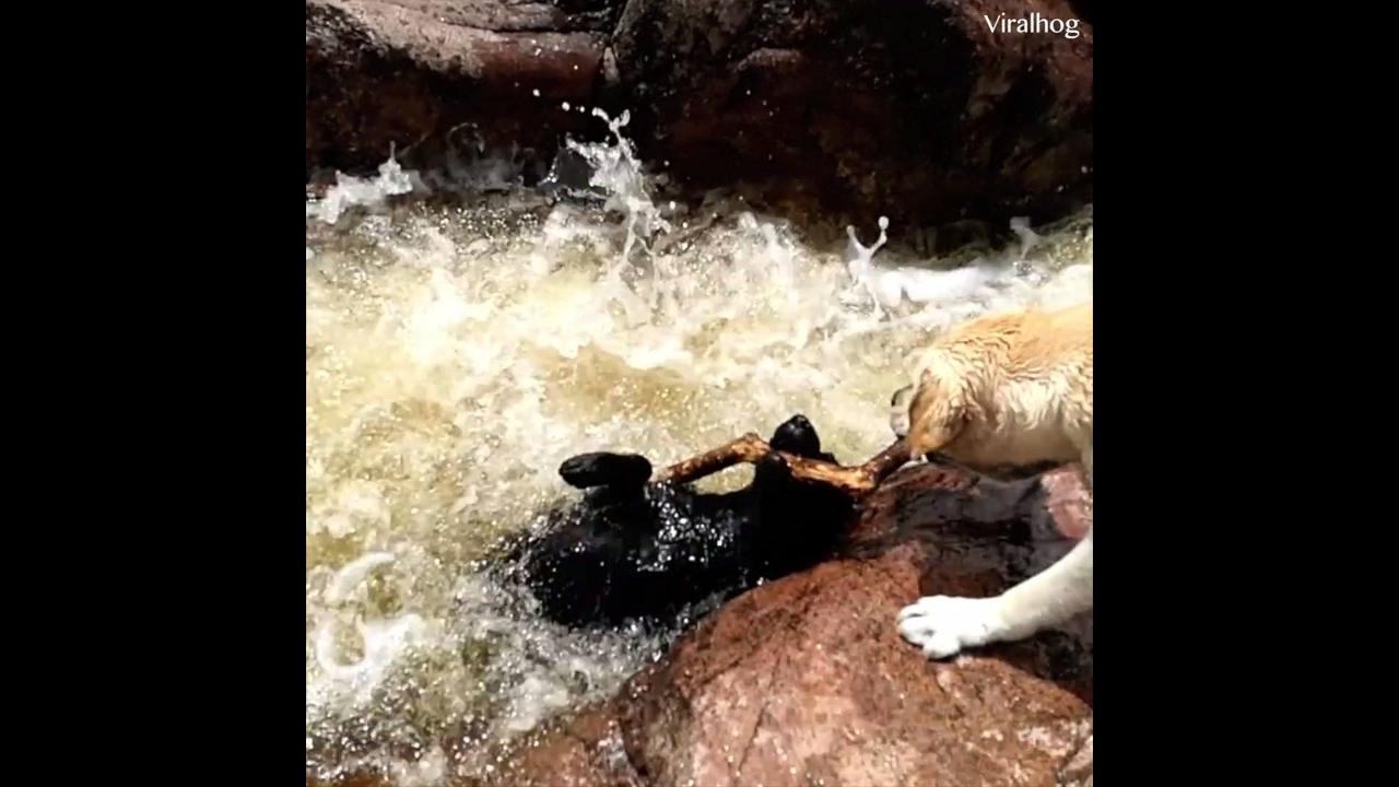 Vídeo de animais que vai mexer com seu coração