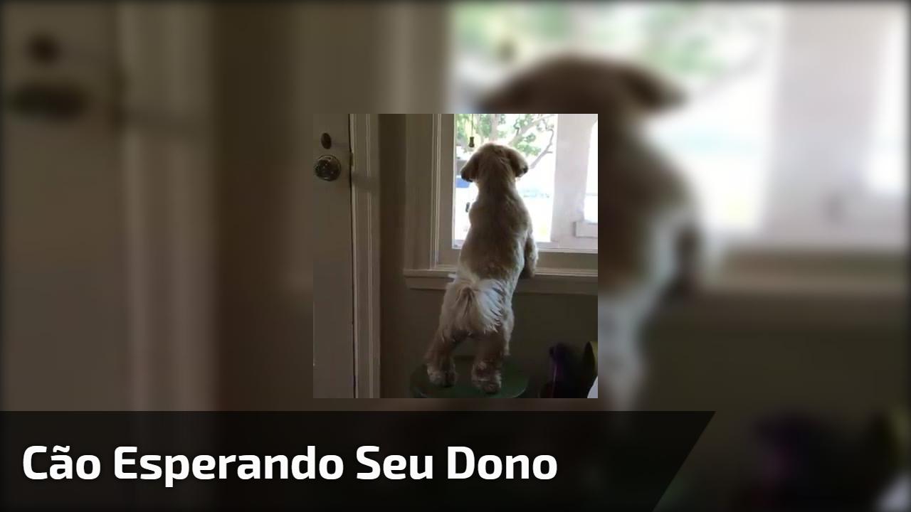 Vídeo de cachorrinho esperando seu dono, olha só que fofura!!!