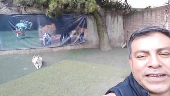 Video De Cachorro Border Collie Mais Fofo De Todos, Até Bailar Ele Baila!