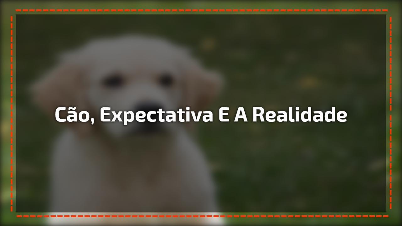 Cão, expectativa e a realidade