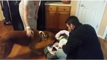 Vídeo De Cachorro Recebendo Pela Primeira Vez O Bebê Em Casa!