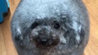 Video De Cachorros Bem Engraçado Para Compartilhar No Facebook!