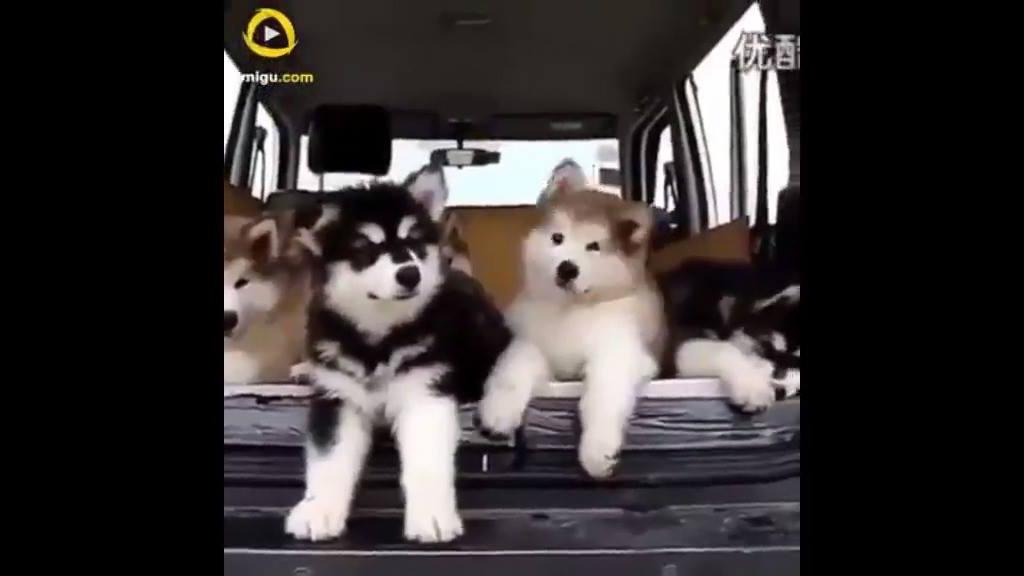 Vídeo de cachorros em situações engraçadas