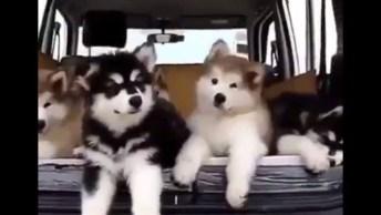 Vídeo De Cachorros Em Situações Engraçadas, Hahaha! É Cada Uma Que Eles Aprontam