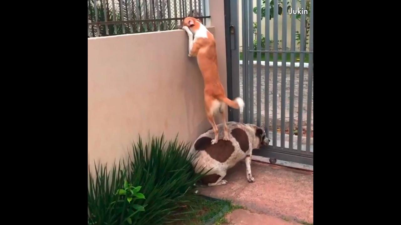 Video de cachorros super engraçado