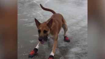 Vídeo De Cachorros Versus Gelo, Olha Só Que Engraçadinhos!
