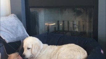 Vídeo De Cães E Bebês, Veja Como Eles São Carinhosos Com Os Bebês!