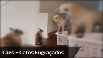 Vídeo De Cães E Gatos Para Fazer Você Dar Boas Risadas, Eles São Demais!