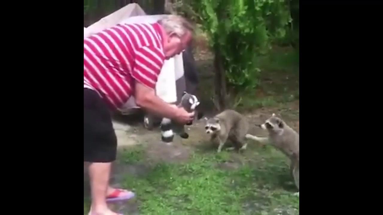 Vídeo de cães e gatos reagindo a brinquedos
