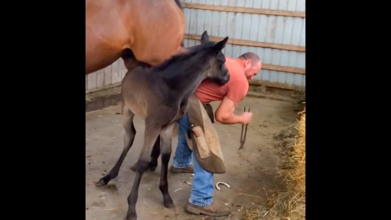 Vídeo de filhotes de cavalos brincando