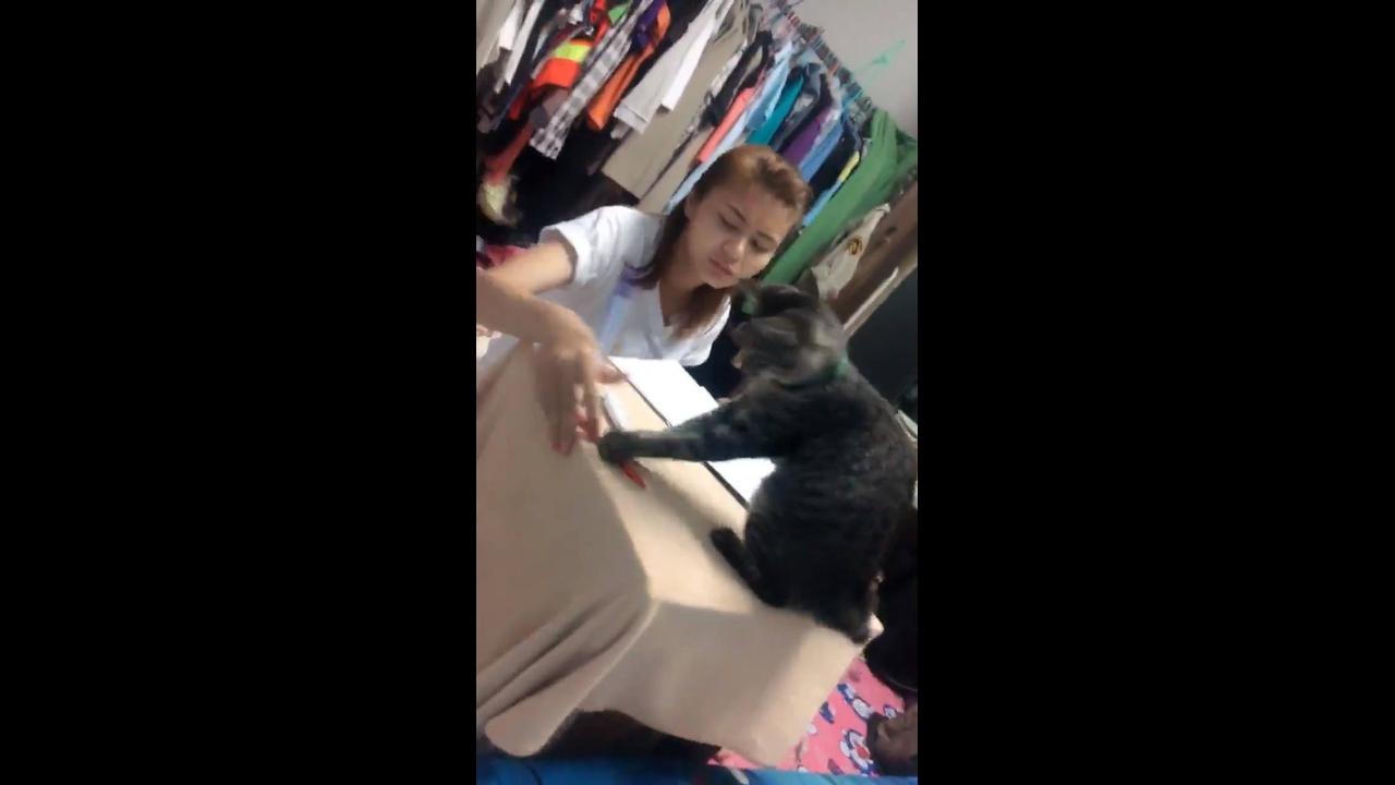 Vídeo de garota tentando estudar, mais gatinho não deixa!!!