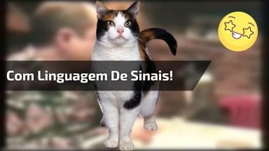 Vídeo De Gatinho Que Se Comunica Com Seu Dono Com Linguagem De Sinais!