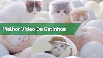Video De Gatinhos Nascendo Dos Ovos, Veja Que Imagens Incríveis!
