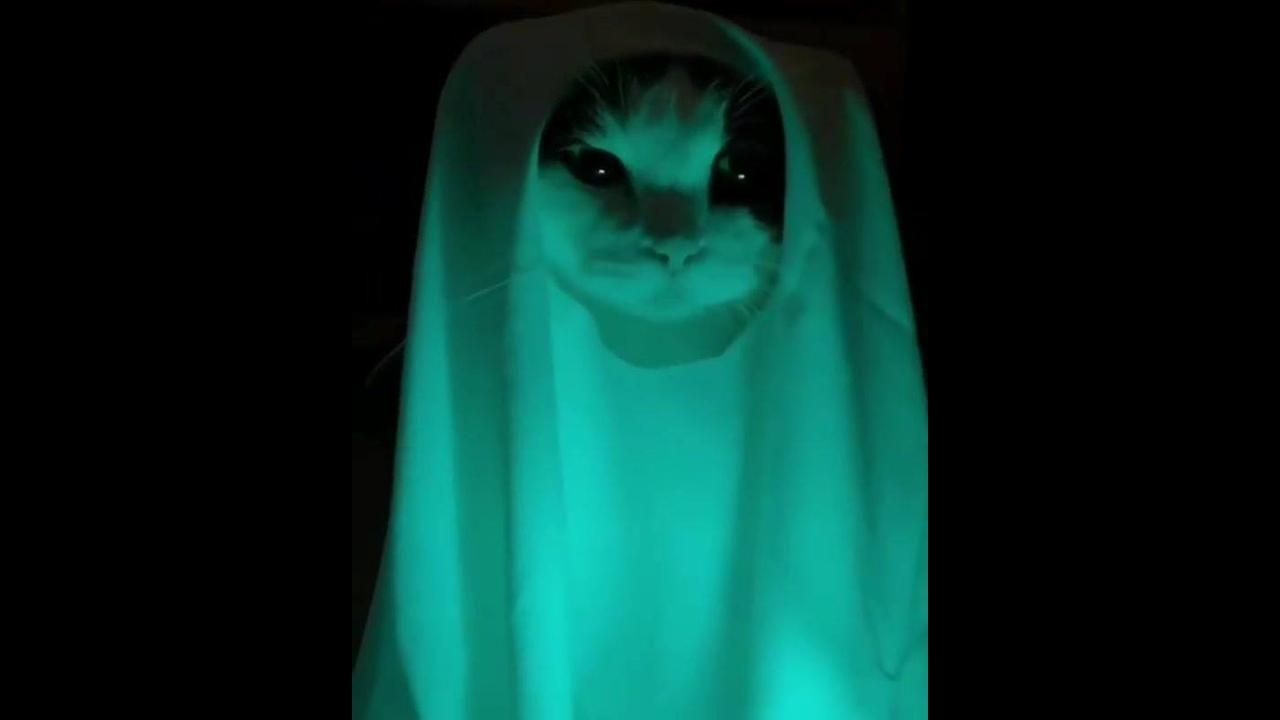 Video de gato assustador... Só que não hahaha