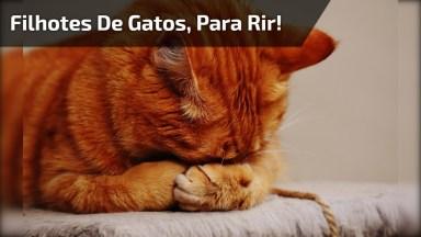 Video De Gato Mais Engraçado E Fofo, Impossível Não Rir!