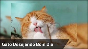Video De Gato Para Desejar Bom Dia, Uma Fofura Que Não Tem Tamanho!