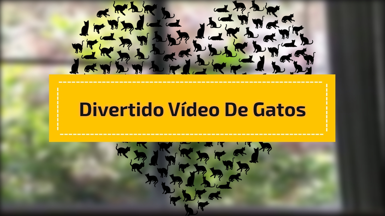 Divertido Vídeo de gatos