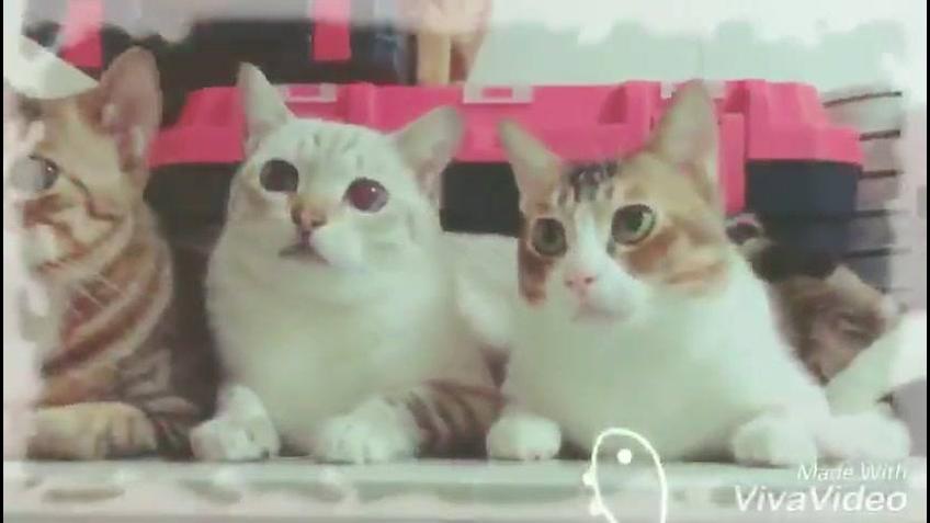 Video de gatos para compartilhar no Facebook