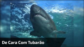 Vídeo De Homem Que Pulou No Mar E Deu De Cara Com Tubarão!