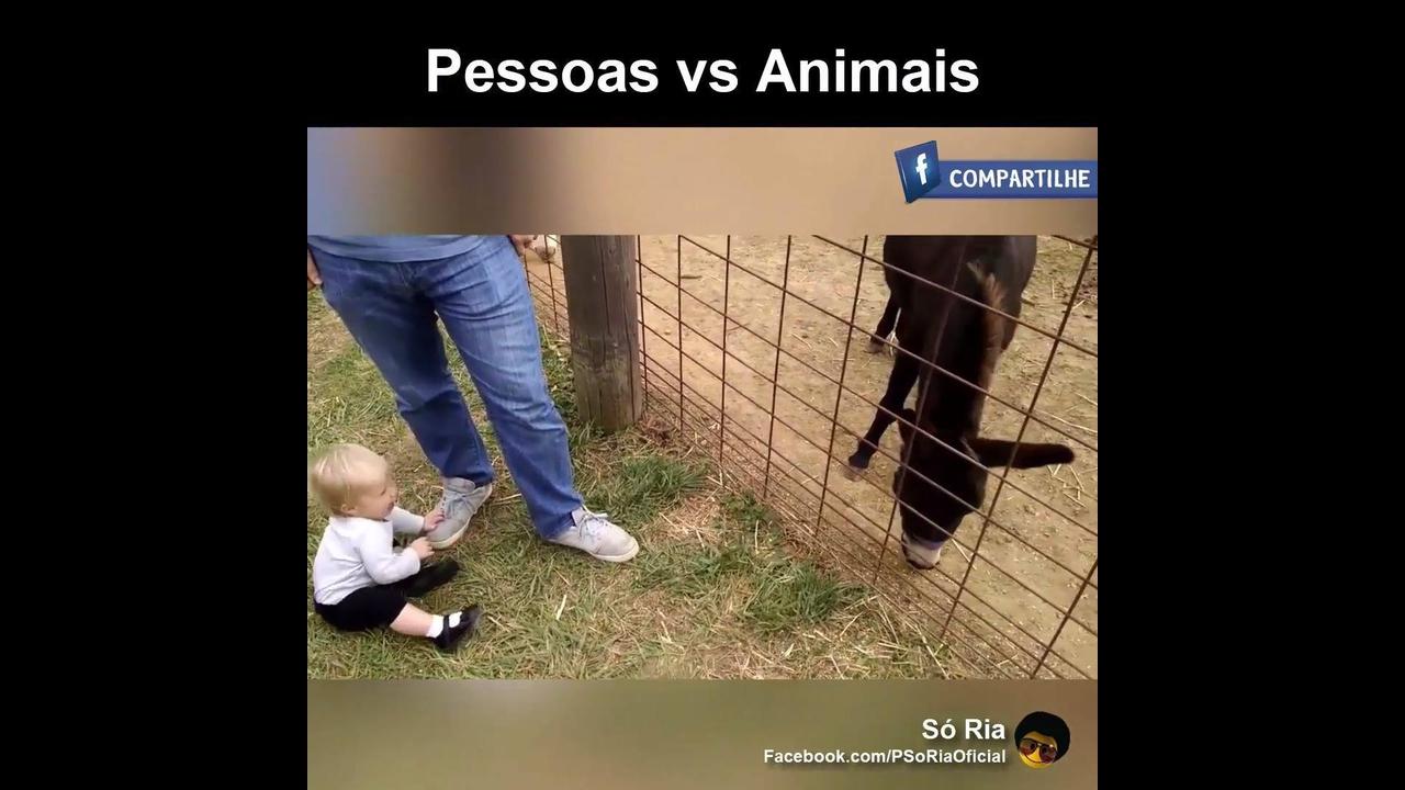 Vídeo de pessoas versus animais