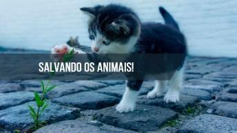 Vídeo De Salvamento De Vários Animais, Ainda Há Esperança Na Humanidade!