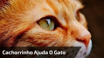 Video Do Cachorrinho Que Ajuda Um Gato A Sair De Um Buraco, Que Lindo!