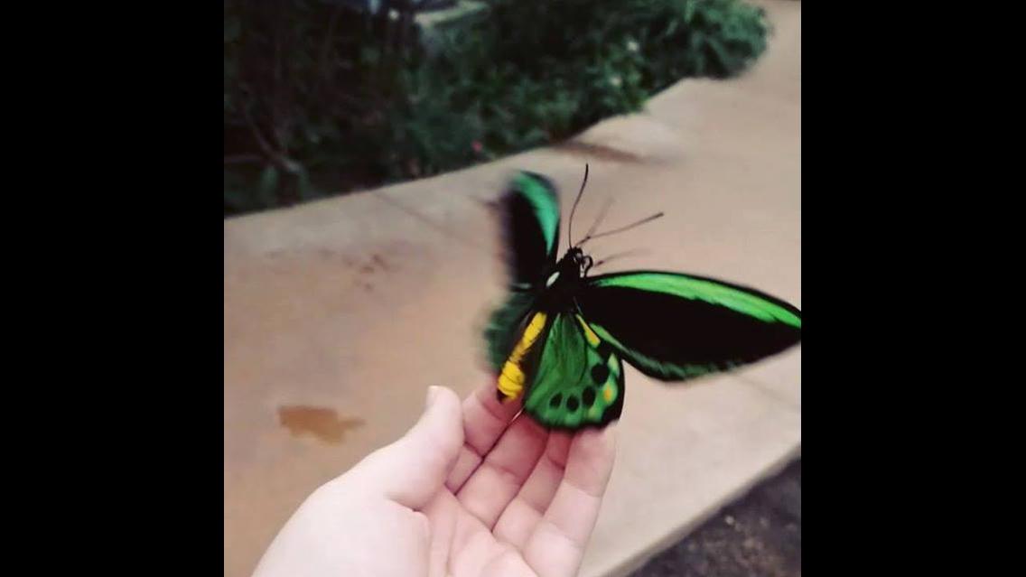 Vídeo em câmera lenta de borboleta levantando voo