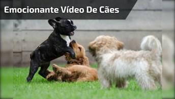 Video Emocionante De Cachorros, Impossível Não Se Emocionar!