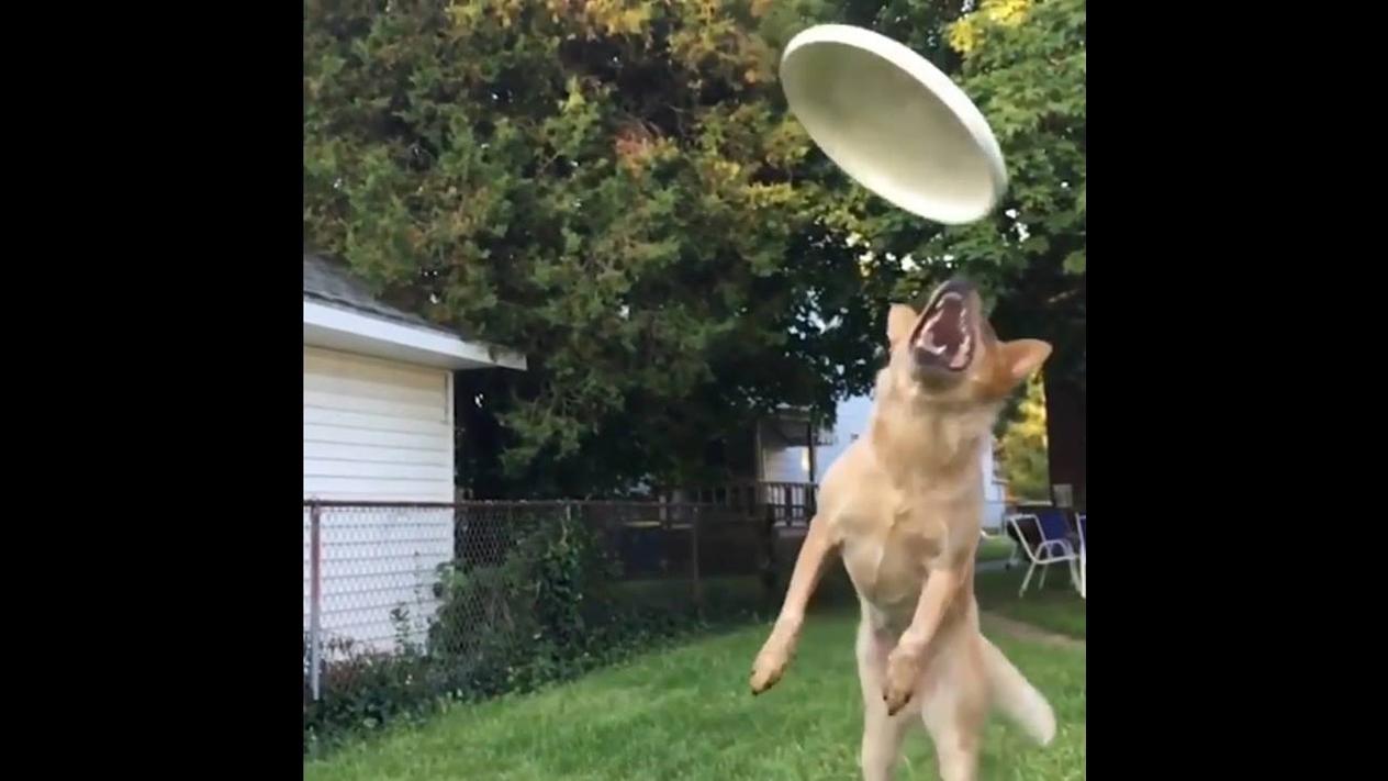 Video engraçado de animais aprontando