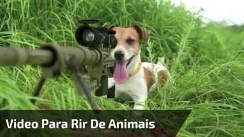Video Engraçado De Animais, Mais Uma Montagem Que A Gente Ama!