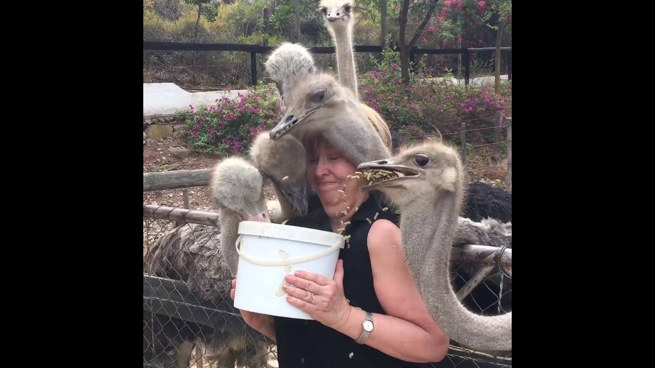 Video engraçado de animais na hora de alimentar