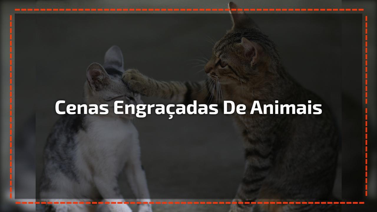 Cenas engraçadas de animais