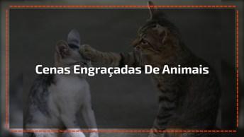 Video Engraçado De Animais, Você Vai Se Divertir Com Eles!