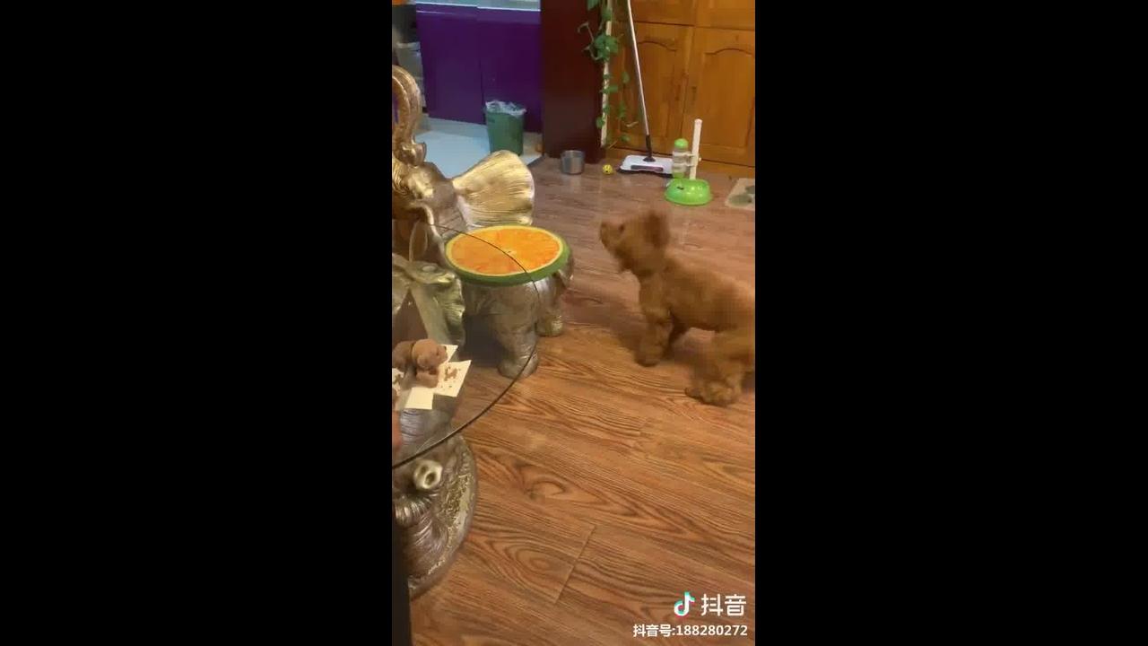 Video engraçado de cachorrinho fofo, ele se aprece com um ursinho!