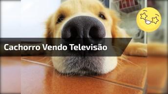 Video Engraçado De Cachorro Vendo Televisão E Comendo No Sofá!