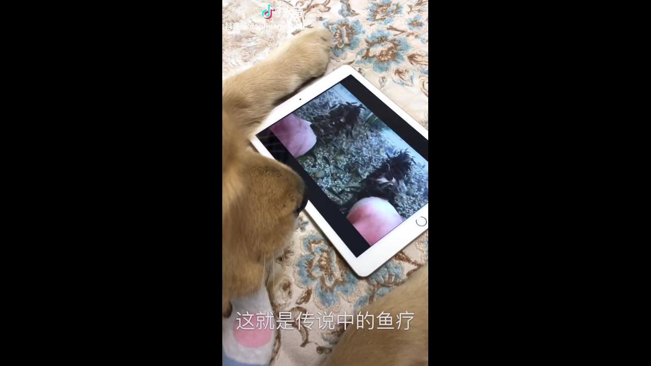 Video engraçado de cachorro