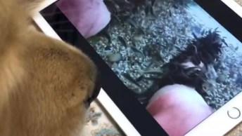 Video Engraçado De Cachorro, Você Vai Dar Muitas Risadas Hahaha!