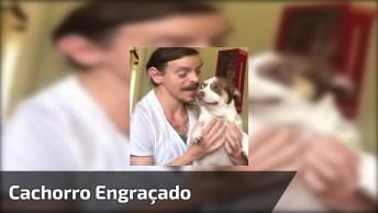 Video Engraçado De Cachorro, Você Vai Dar Muitas Risadas!