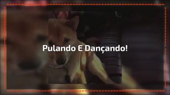 Video Engraçado De Cachorros, Compartilhe Em Seu Facebook!