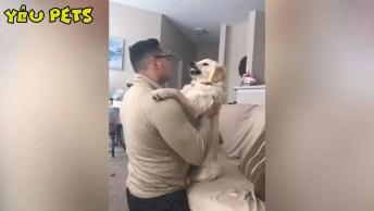 Video Engraçado De Cachorros, Esses Tiraram O Dia Para Te Fazer Dar Risadas!