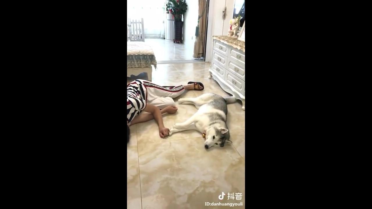 Video engraçado de cachorros na hora de comer hahaha, confira!