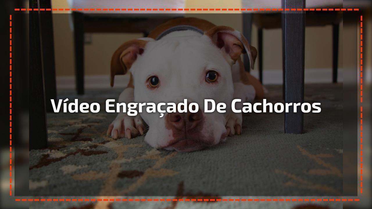 Vídeo engraçado de cachorros