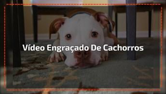 Video Engraçado De Cachorros, Veja O Que Esses Animais São Capazes De Aprontar!