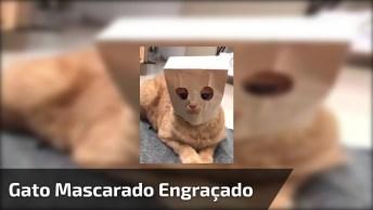 Video Engraçado De Gato, Agora Ele Está Pronto Para Salvar O Mundo Hahaha!