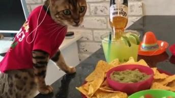 Video Engraçado De Gato Mexicano, Olha O Banquete Para Ele, Sem Contar O Visual!