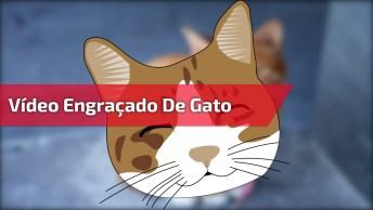 Video Engraçado De Gato Recebendo Carinho Nas Costas, Você Vai Adorar!