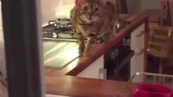 Video Engraçado De Gato, Veja Como Ele Foi Se Aproximando Sem Ser Notado!